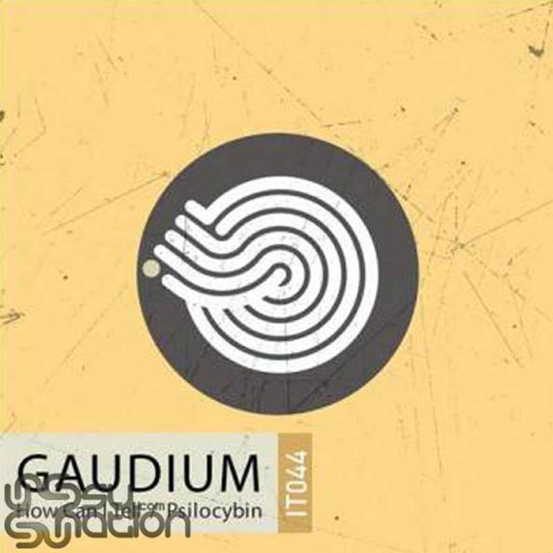 Gaudium - How Can I Tell / Psilocybin